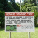The stinging tree and other dangers of Queensland