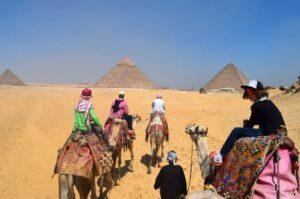 Camels at the pyramids. Riding.