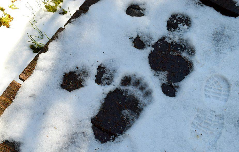 There's a Bear in There! Walking in Transylvania