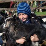 Goats child Maramures Sighetu Marmatiei Romania