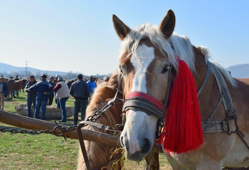 Horse market sighetu marmatiei