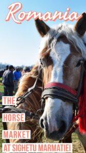 The horse market at Sighetu Marmatiei