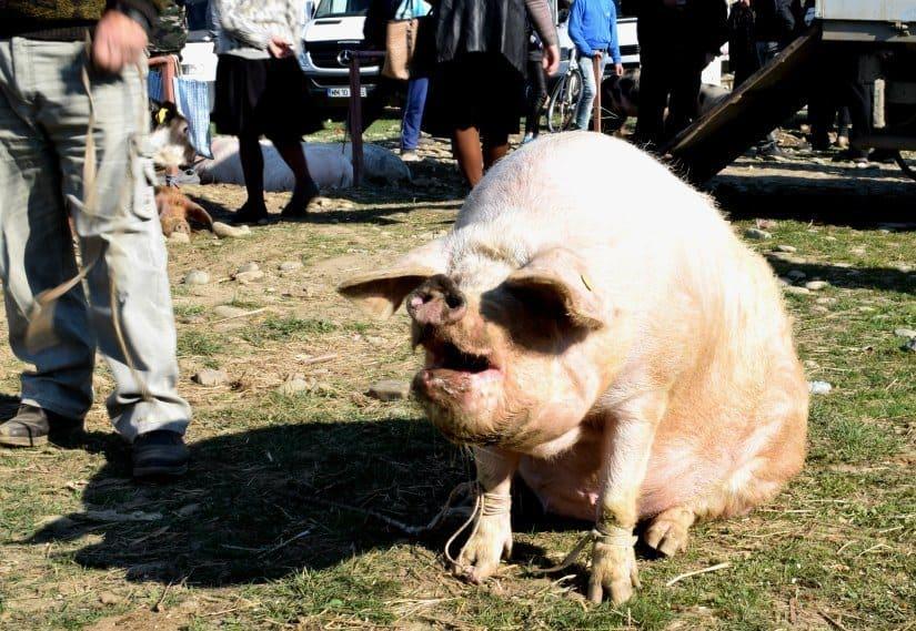big pig farmer's market romania
