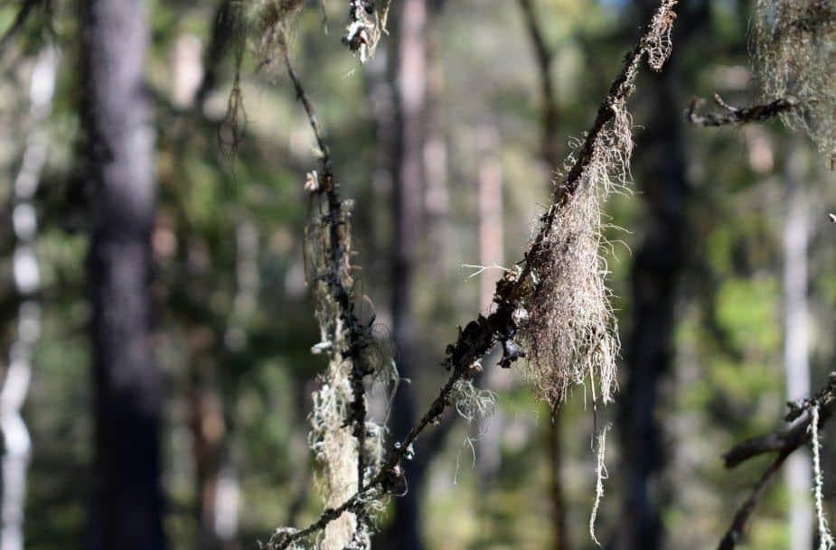 walking in the woods romania bears danger