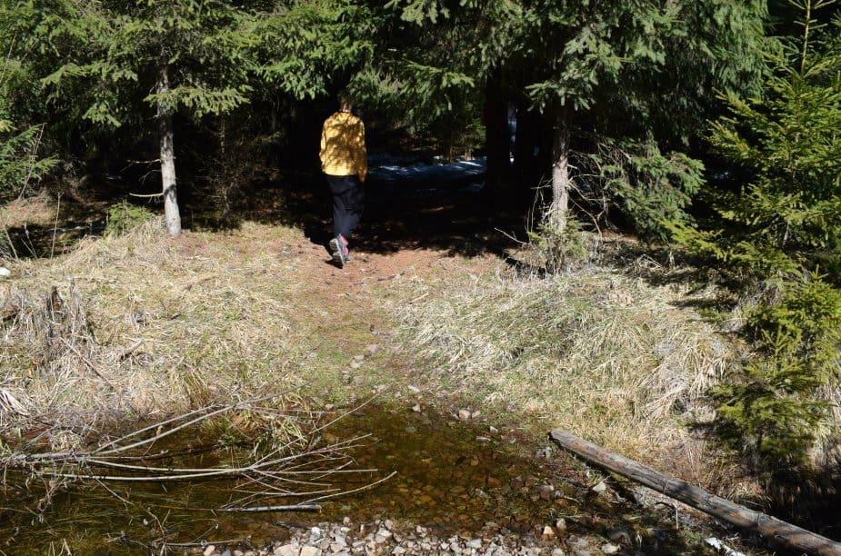 walking track bears near bistrita