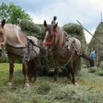 The Haystacks of Maramures. Hay Making in Breb