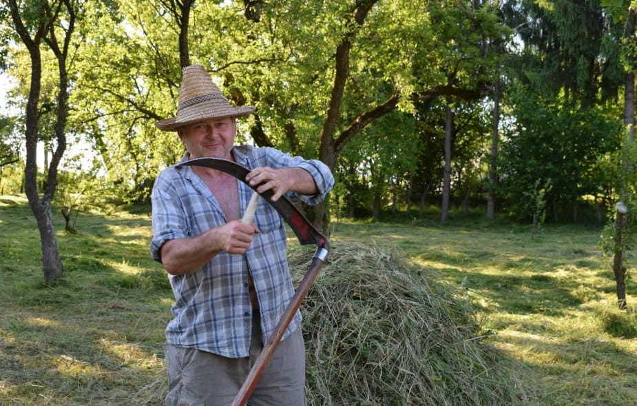 Mihai cutting grass with scythe romania