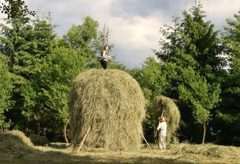 Woman on a haystack Romania Maramures