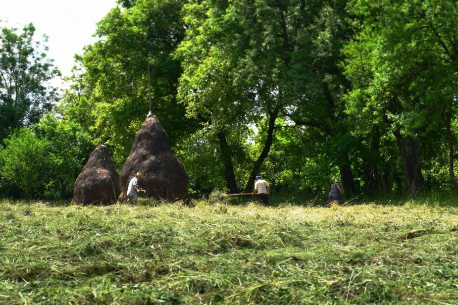 hay making in breb