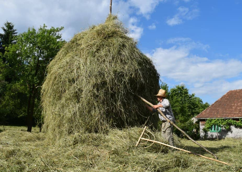 making a haystack in romania