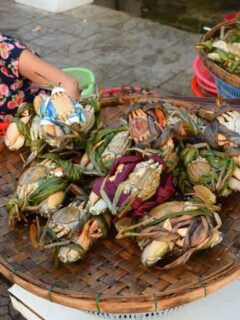 Hoi An Fish Market sorting crabs ( Central Market)