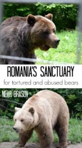 Romania Sanctuary for bears near brasov