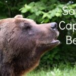 The Brasov Bear Sanctuary Romania (Heartbreaking)