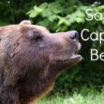 The Brasov Bear Sanctuary. Heartbreaking.