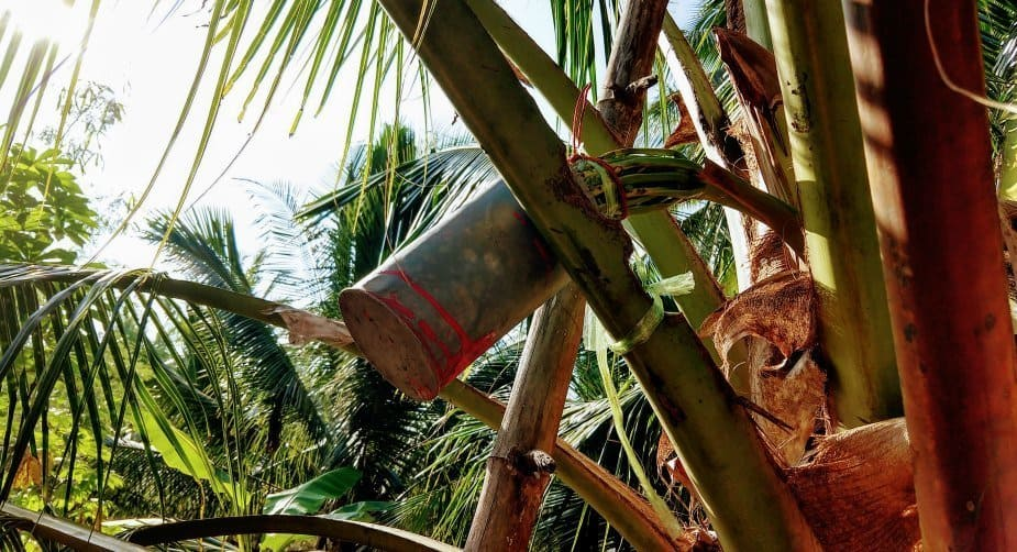 Day Tours from Bangkok Tha Kha Market and Meklong Railway. Making Coconut Sugar