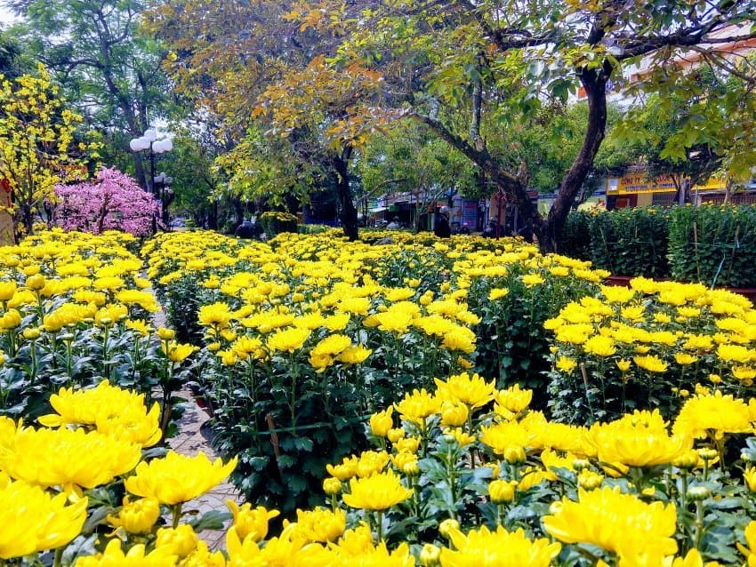 Hoi An Before Tet Flowers for Tet