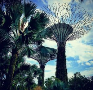 Places to Visit in Singapore. Supertrees. Gardens by the Bay