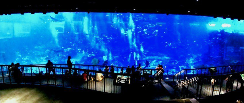 Places to see in Singapore SEA Aquarium