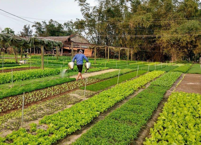Tra Que Gardens Hoi An Vietnam