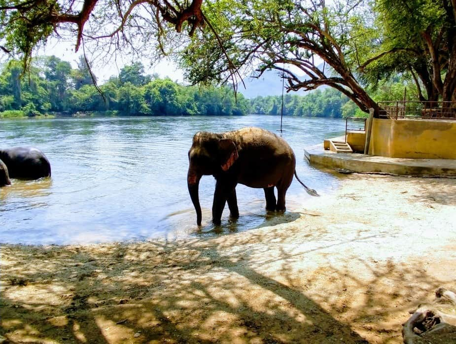 See Elephants in Thailand from Bangkok. Etical Elephant Rescue Kanchanaburi Itinerary for Thailand