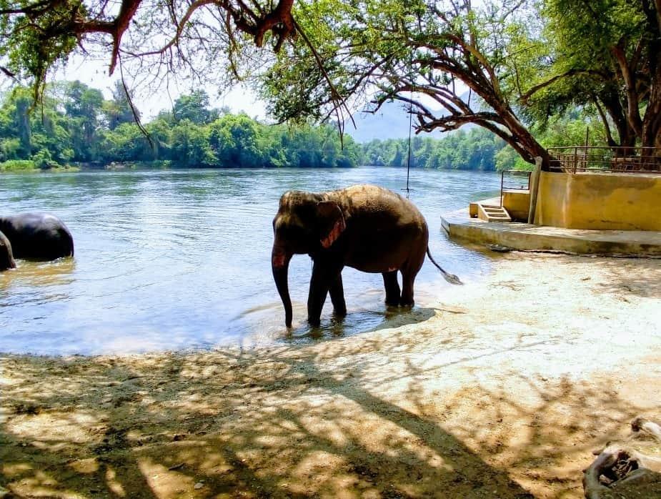 See Elephants in Thailand from Bangkok. Etical Elephant Rescue Kanchanaburi Itinerary for Thailand