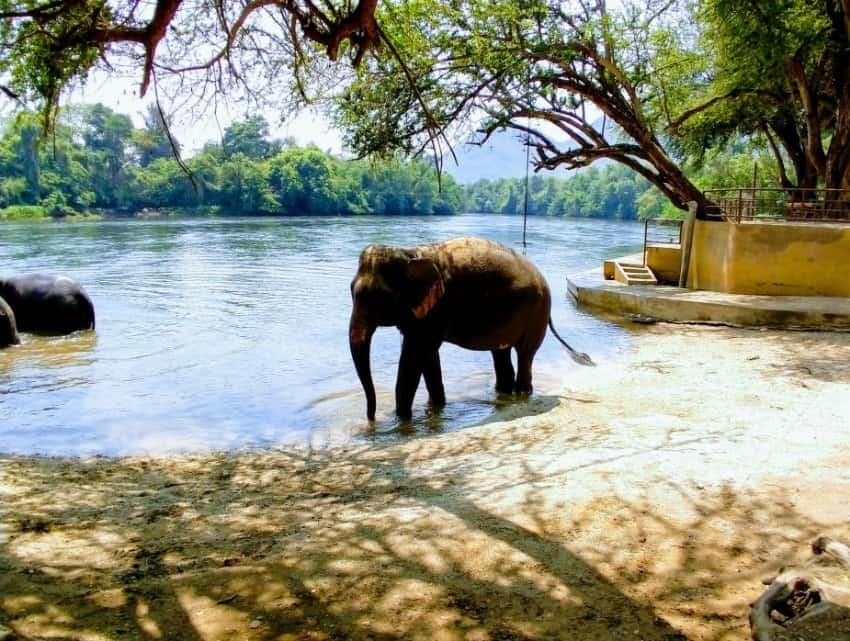 Day Trip to see elephants from bangkok