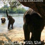 Elephants World Kanchanaburi Thailand Elephant Park River Kwai