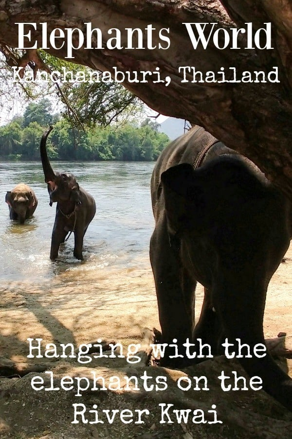 Elephants World Kanchanaburi Thailand Elephant Park River Kwai
