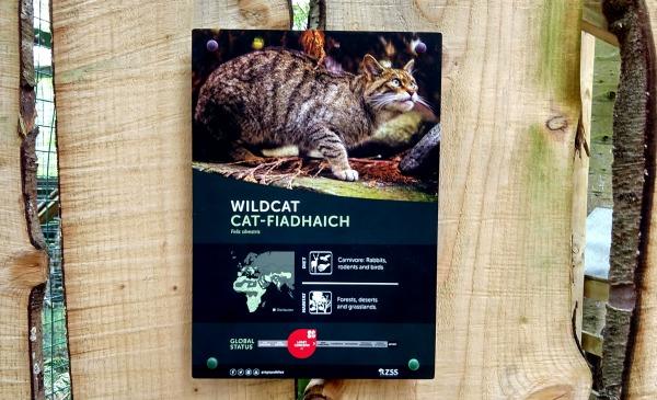 Wild cats at Scottish Wildlife Park blog