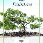 Port Douglas and Daintree