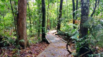Walking Marrja Botanical Walk Cape Tribulation