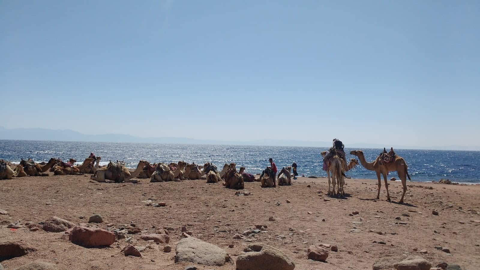 Egyptian Beaches Best Beaches In Egypt For Your Vacation