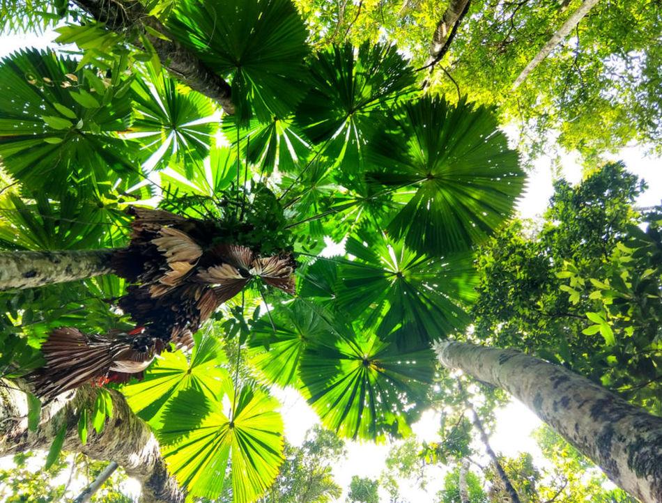 Family Gap Year Ideas Visit a Rainforest