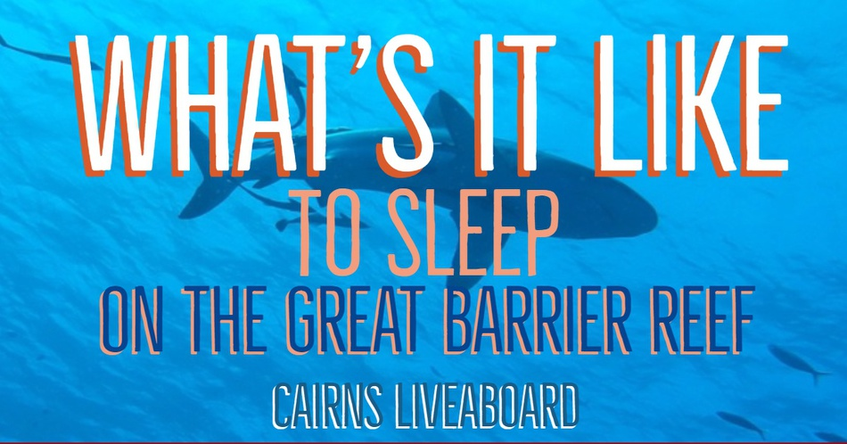 liveaboard cairns liveaboard diving australia