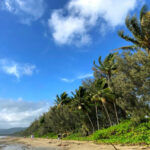 Best Time to Visit Port Douglas