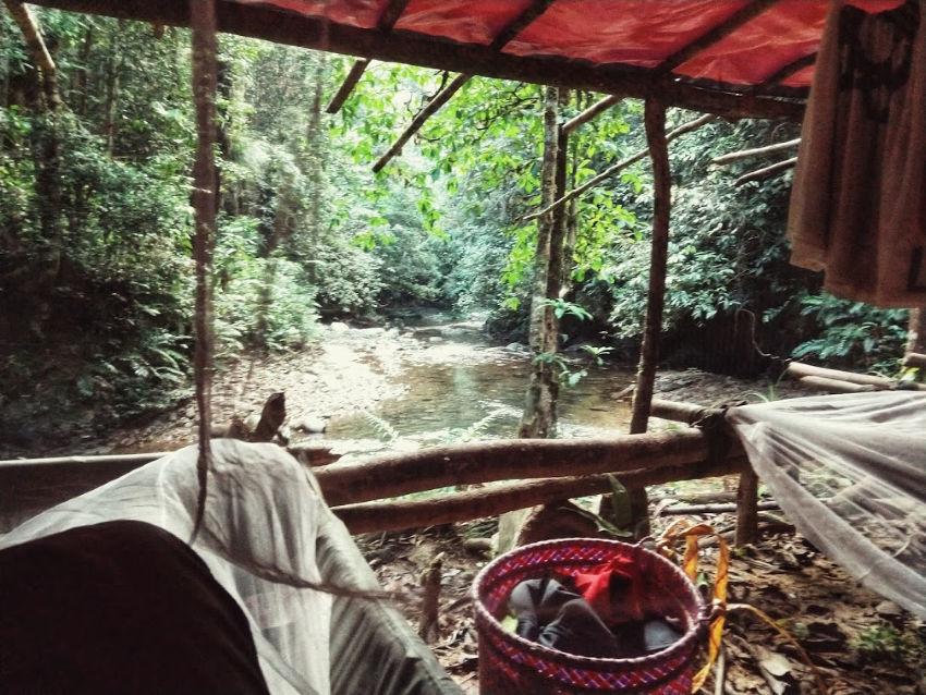 camping jungle borneo homestay