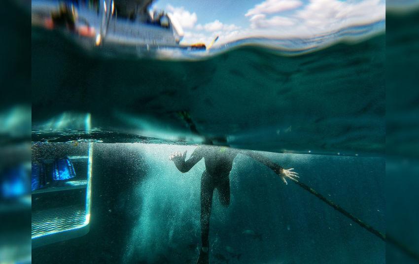Port Douglas Diving Visibility