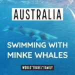 Swimming (and Diving) With Minke Whales