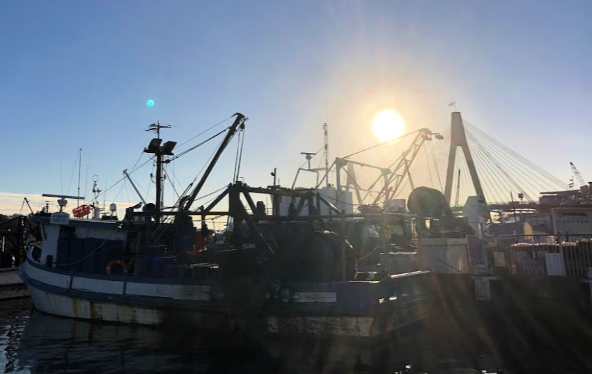 Fishing Boats at Sydney Fish Market