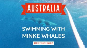 Swimming with minke whales