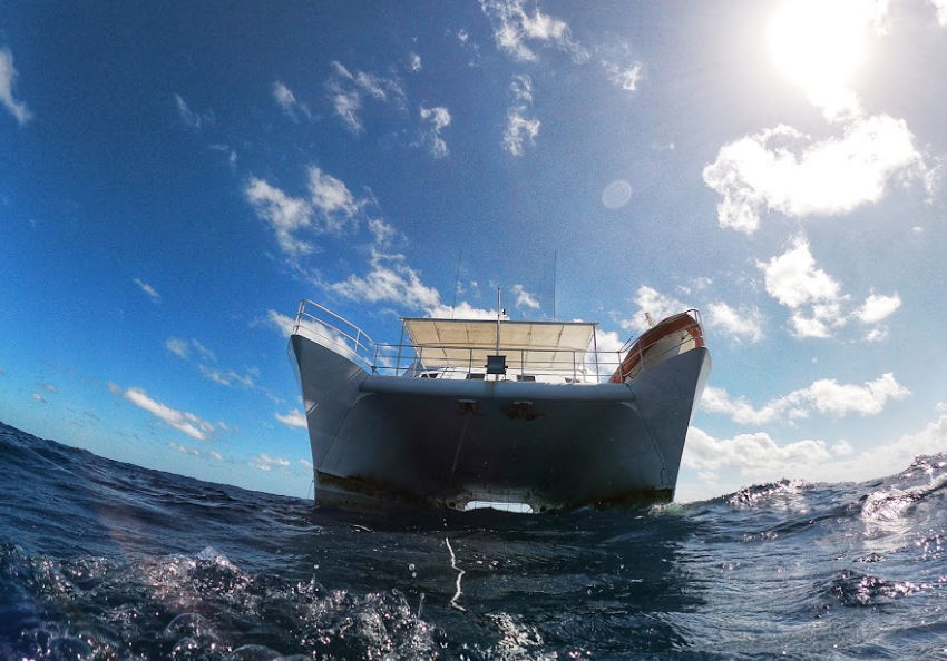 minke liveaboard trip swimming with whales