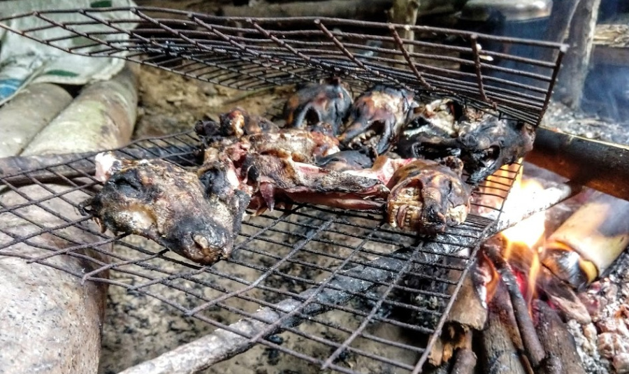 Food at the Iban Longhouse  civet cat and mouse deer heads