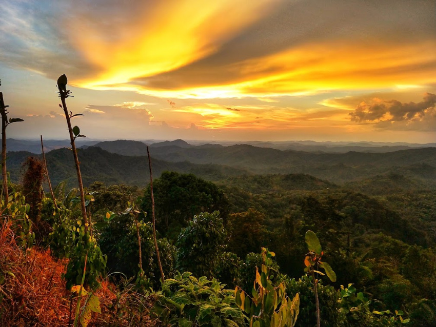 Iban Longhouse stay near Kuching Pepper fields beautifulSunset