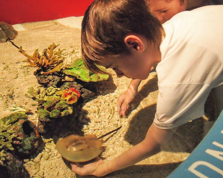 Touch Pool Kuala Lumpur Aquarium With Kids KLCC Sea World