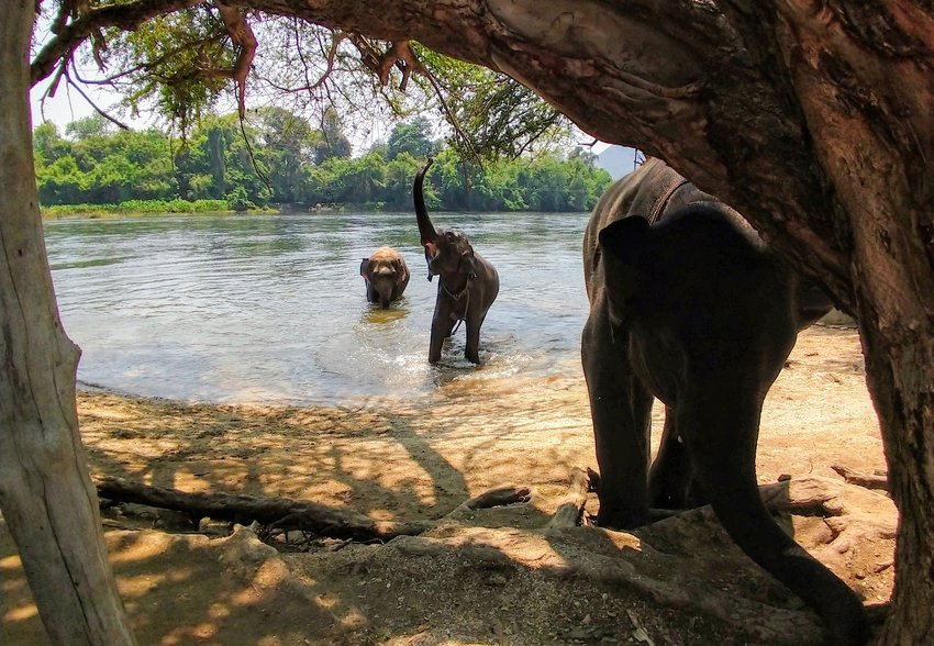 Things to do in Kanchanaburi Elephants World