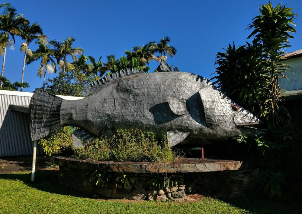 Metal Barramundi Fish The Big Barramundi Daintree Village Australia