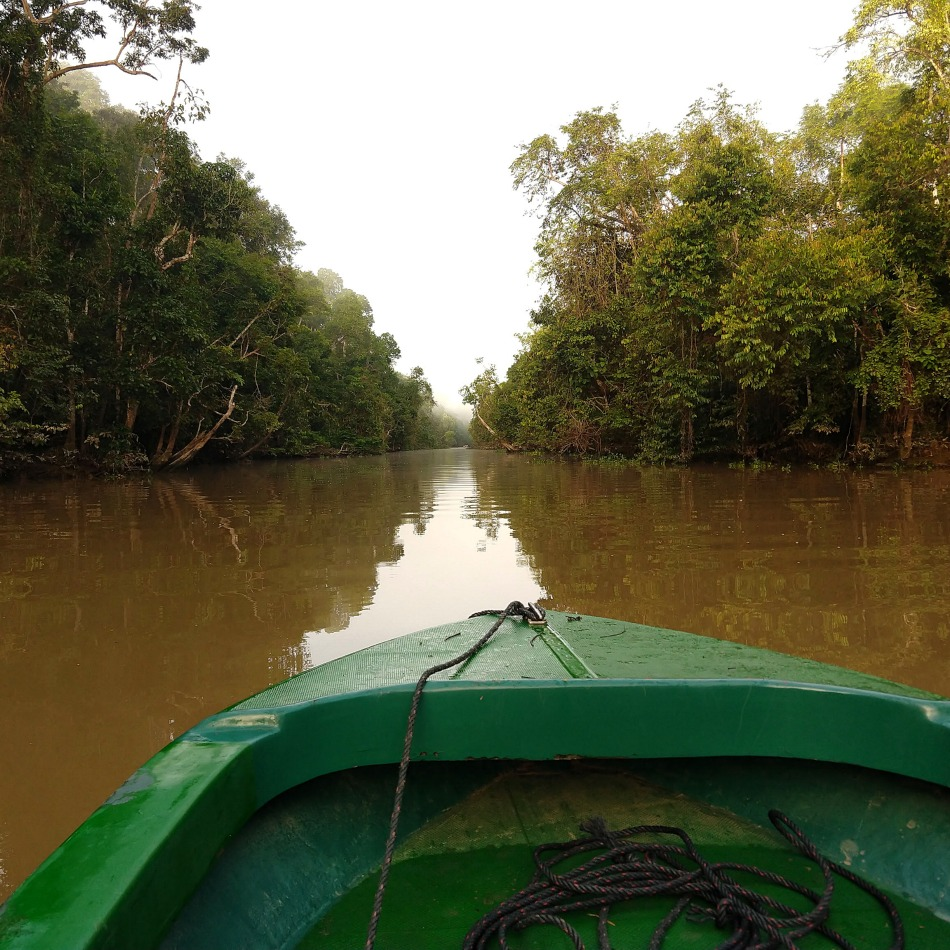 River boat safari sabah malaysia