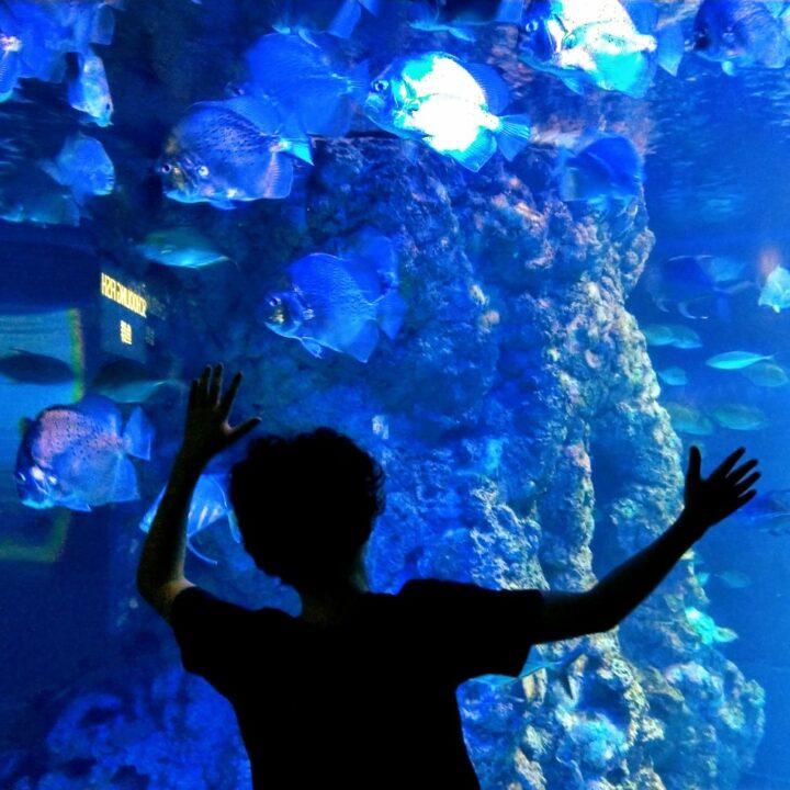 Aquaria in Orlando