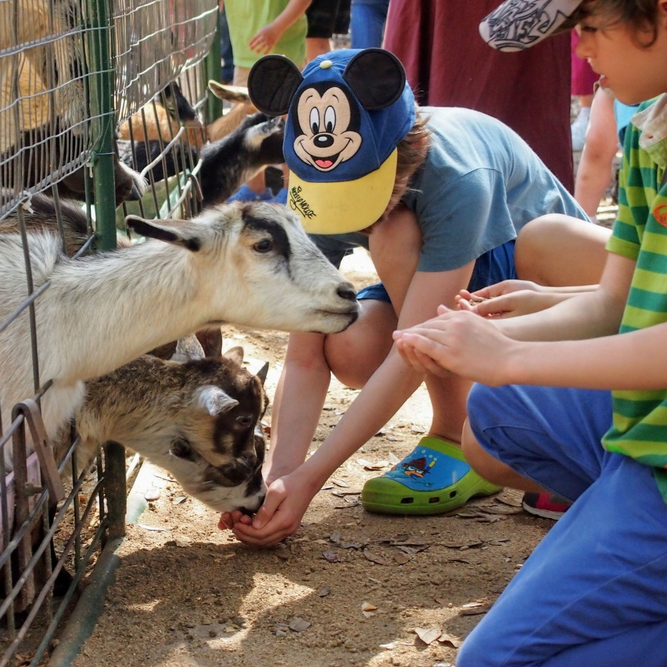 Things to do in Orlando Animal attractions