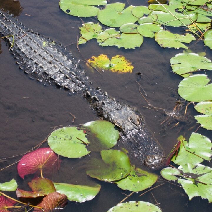 Things to do in orlando wildlife